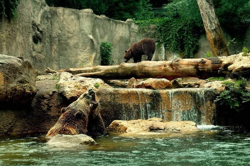 Bioparco di Roma (Зоопарк для детей всех возрастов) - фото