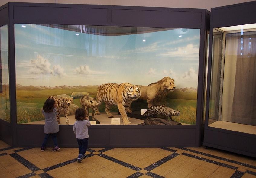 Римский зоологический музей (Museo Civico di Zoologia) - фото